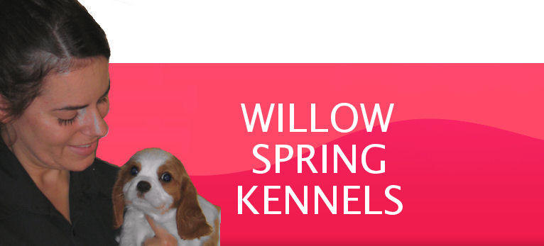 dog spring quotes